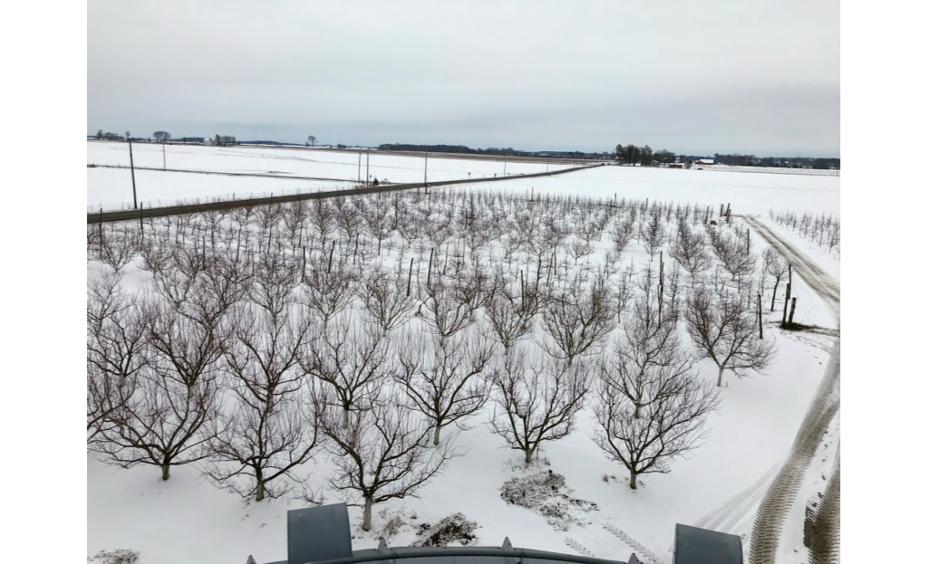 The picture shows part of our orchard when we had a few inches of snow, but temperatures were not quite so cold!  Snow actually helps insulate the trees from the extreme cold and is welcomed before the frigid temperatures come.
