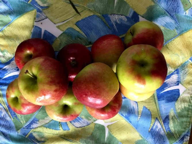 Its Apple Season!